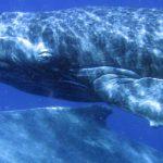 baleineau-antsiva