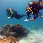 Reef Check Antsiva Mitios 2012