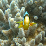Missions cientifiques de surveillances des récifs à Madagascar
