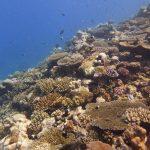 Récif corallien au Geyser