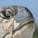 turtle madagascar