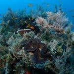 Bénitier et récif corallien
